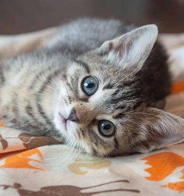 Kitten on Blanket